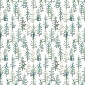 blue spruce // small