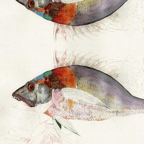 Poisson En Process: A Fish in Motion
