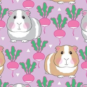 guinea pigs and radishes on purple