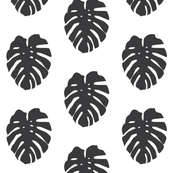 soft black monstera leaves on white