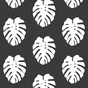 white monstera leaves on soft black