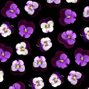 pressed flowers fabric - pansy fabric, viola fabric, purple floral fabric, pansies, violets, florals - black