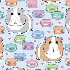 guinea pigs and macarons on soft blue
