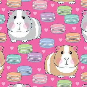 guinea pigs and macarons on hot pink