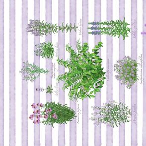 Purple Pollinator Garen - Purple Stripe