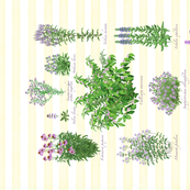 Purple Pollinator Garden - Yellow Stripes