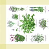 Purple Pollinator Tea Towel - Yellow Border