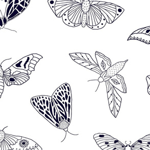Hand Drawn Butterflies and Moths on White