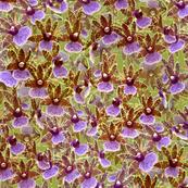 Zygopetalum Orchid Sprays on Green 300