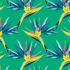 Bird of Paradise II- Mint