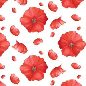 Red Heads|Red Poppy Flower|Renee Davis