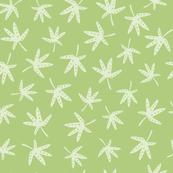 Acer Leaves Green