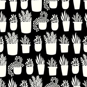 Houseplants - black and white