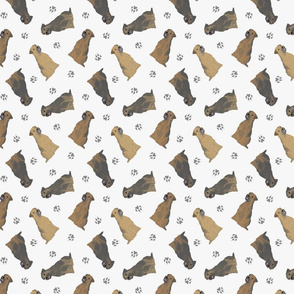 Tiny Border Terriers - gray