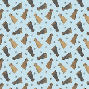 Tiny Border Terriers - blue