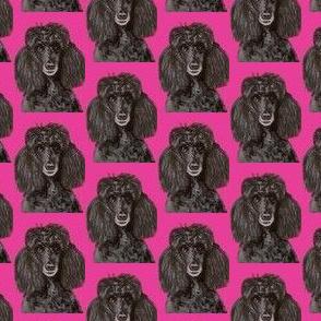 Poodle black & pink