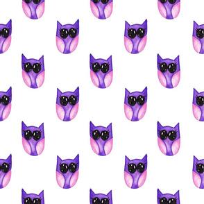 Purple baby owl