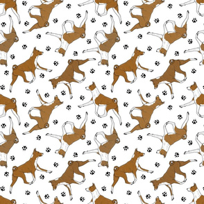 Trotting red Basenjis and paw prints - white