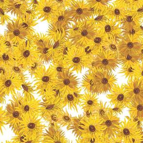 Van Gogh Sunflowers full on white