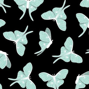 luna moth -  mint on black - LAD20