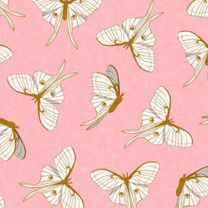 luna moth -   gold on pink - LAD20