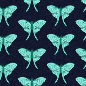 (jumbo scale) luna moth - teal on navy - v1 - LAD20