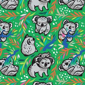 koala forest