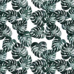 monstera leaves - dark green - LAD20