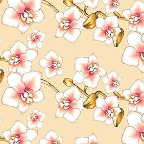 Orchids Small - Cream