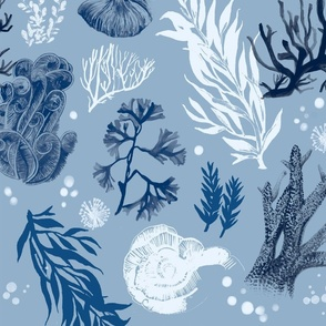 Blue Coral and Seaweed-Limited Colour