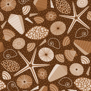 brown seashells