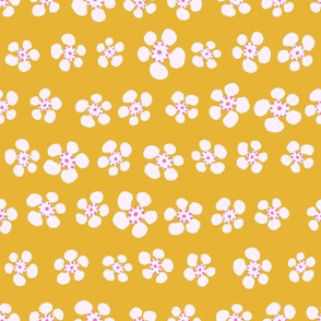 Geraldton Wax - Mustard