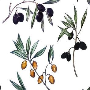 Watercolor Botanical Spring Olives