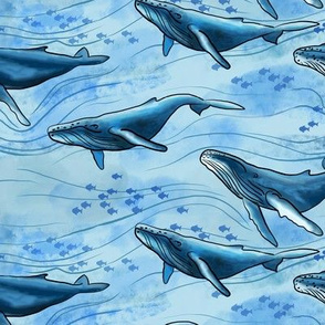 Blue Whales (medium scale)