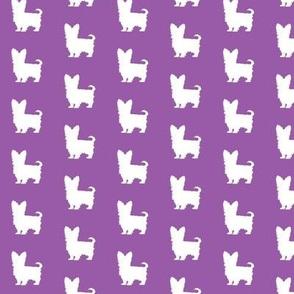 Purple Yorkie