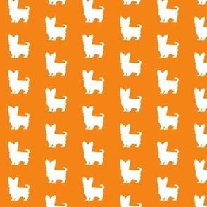 Orange Yorkie
