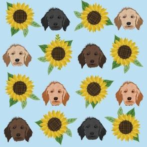 doodle dog sunflower fabric - dog head fabric, golden doodle fabric, doodle dogs - light blue