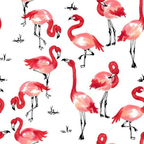 Flamingo Lingo in pink and coral watercolors on white background | summer vacation beach pool vibes
