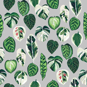 variegated palm plants fabric - palm print, monstera fabric, palm print wallpaper, monstera wallpaper, variegated leaves - grey