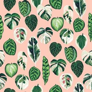 variegated palm plants fabric - palm print, monstera fabric, palm print wallpaper, monstera wallpaper, variegated leaves - blush