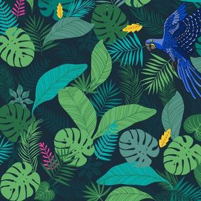 Blue arara rainforest