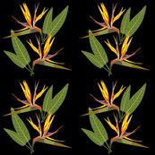 Birds of Paradise - Tropical Strelitzia #1 Black, large