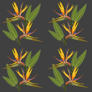 Birds of Paradise - Tropical Strelitzia #1 Charcoal Grey, large