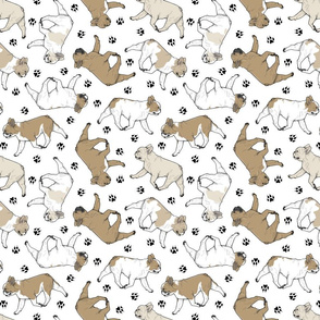 Trotting fawn French Bulldogs and paw prints - white