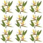 Birds of Paradise - Tropical Strelitzia #1 White, medium