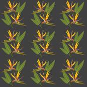 Birds of Paradise - Tropical Strelitzia #1 Charcoal Grey, medium