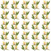 Birds of Paradise - Tropical Strelitzia #1 White, small