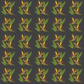 Birds of Paradise - Tropical Strelitzia #1 Charcoal Grey, small