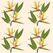 Birds of Paradise - Tropical Strelitzia #1 Creamy Beige, large