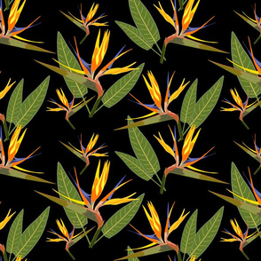 Birds of Paradise - Tropical Strelitzia #4 Black, large